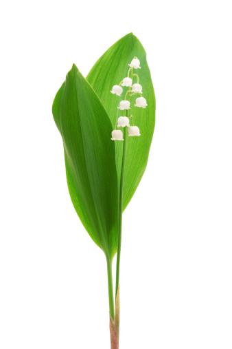 茎「Lily of the valley」:スマホ壁紙(6)