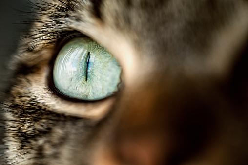 Iris - Eye「Cat eye, close-up」:スマホ壁紙(15)