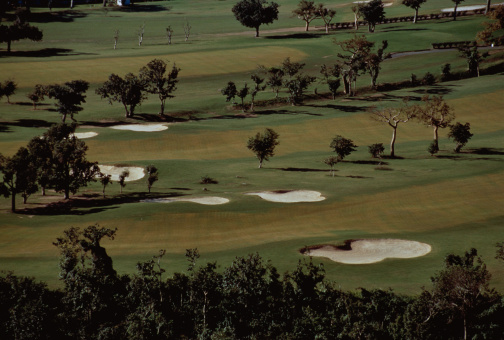 Sand Trap「Trees on Golf Course」:スマホ壁紙(10)