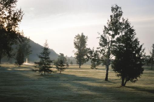 Golf Links「Trees on golf course」:スマホ壁紙(11)