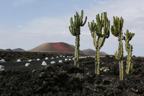 Volcanic Landscape「Spain, Lanzarote, Volcanos」:スマホ壁紙(1)