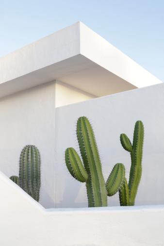 Atlantic Islands「Spain, Lanzarote, Puerto del Carmen, Cactus growing between walls」:スマホ壁紙(5)