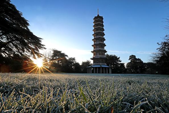 Grass Family「Kew Gardens During England's Third National Lockdown」:写真・画像(14)[壁紙.com]
