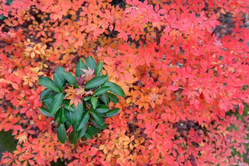 秋+京都「Seasonal colours of autumn」:スマホ壁紙(12)