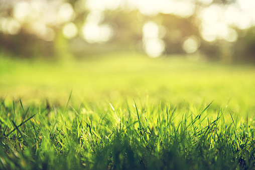 Grass「Spring and nature background concept」:スマホ壁紙(12)