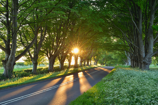 Avenue「Beech tree lined road with sunbeams near Wimborne. Wimborne, Dorset, England, UK.」:スマホ壁紙(6)