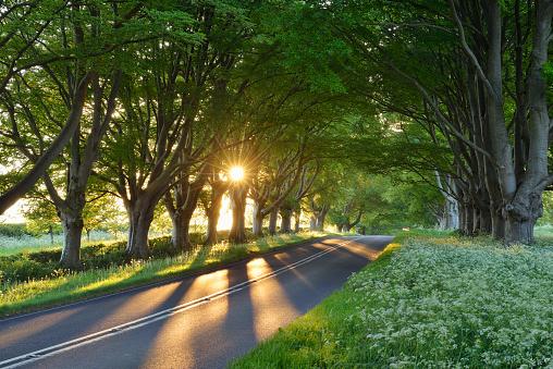 Avenue「Beech tree lined road with sunbeams near Wimborne. Wimborne, Dorset, England, UK.」:スマホ壁紙(8)