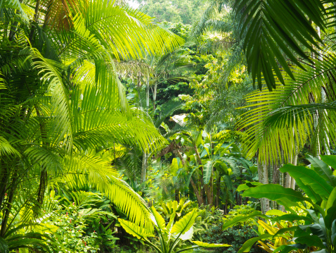 Palm Tree「Interior of a rainforest, Malaysia」:スマホ壁紙(17)