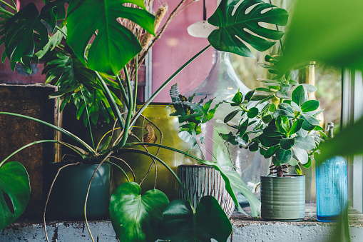 Planting「Interior of a small greenhouse with a lot of green houseplants. Boho style. Eclectic. High quality photo」:スマホ壁紙(8)