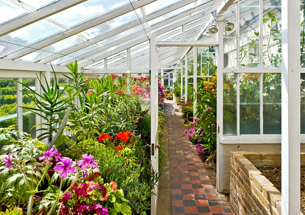 Greenhouse「Interior Of The Greenhouse In The Gardens Of Walmer Castle」:写真・画像(14)[壁紙.com]