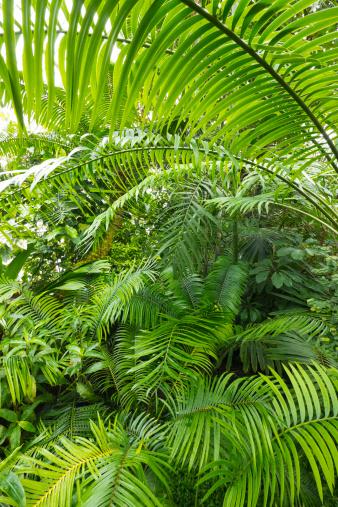 Rainforest「Interior of Amazon Rain forest, Amazonia, Brazil」:スマホ壁紙(14)