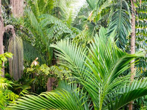 Amazon Rainforest「Interior of Amazon Rain forest, Amazonia, Brazil」:スマホ壁紙(3)