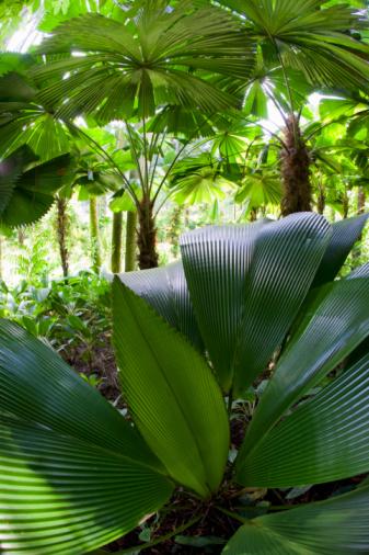 Amazon Rainforest「Interior of Amazon rain forest」:スマホ壁紙(15)