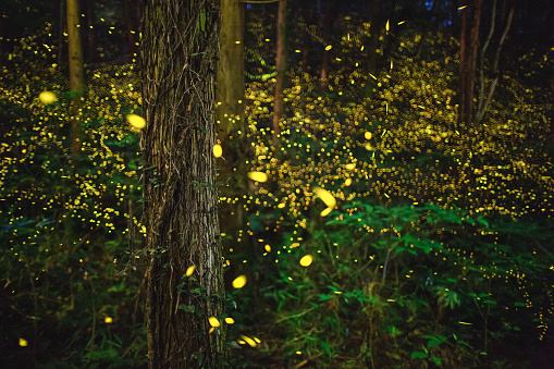 Fantasy「Fireflies glowing in the forest at night」:スマホ壁紙(11)