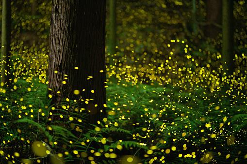 Satoyama - Scenery「Fireflies glowing in the forest at night」:スマホ壁紙(13)