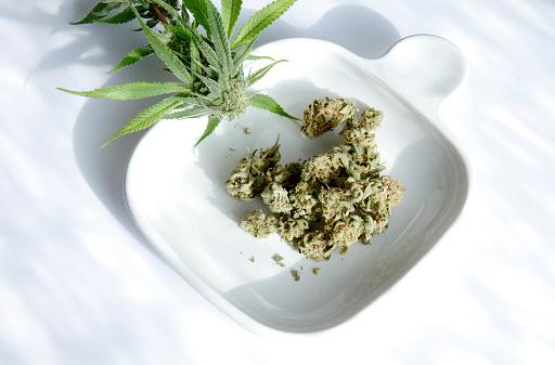 Pennsylvania「marijuana nuggets and plant on displayed」:スマホ壁紙(17)