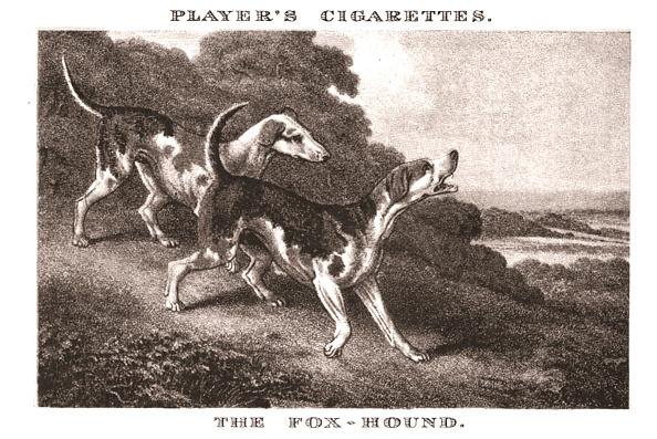 Cigarette Card「The Foxhound」:写真・画像(3)[壁紙.com]
