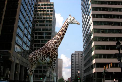 Giraffe「Giraffe in City Street」:スマホ壁紙(11)