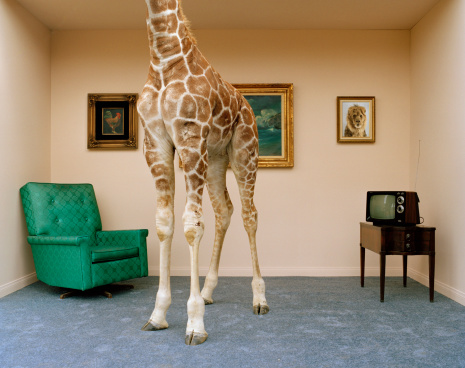 Low Section「Giraffe in living room, low section」:スマホ壁紙(11)