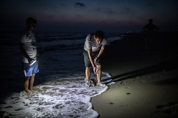 Releasing「Conservation Efforts Continue To Help Stabilize Turkey's Green Turtle Population」:写真・画像(15)[壁紙.com]