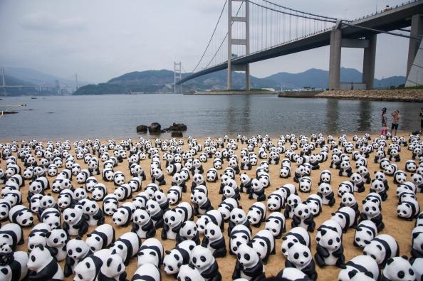 自然・風景「1600 Paper-made Pandas Exhibit In Hong Kong」:写真・画像(15)[壁紙.com]