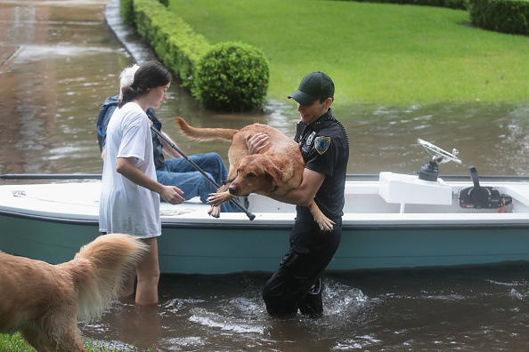 犬「Epic Flooding Inundates Houston After Hurricane Harvey」:写真・画像(6)[壁紙.com]