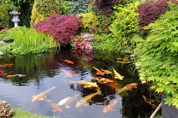 Japanese garden with koi fish:スマホ壁紙(壁紙.com)