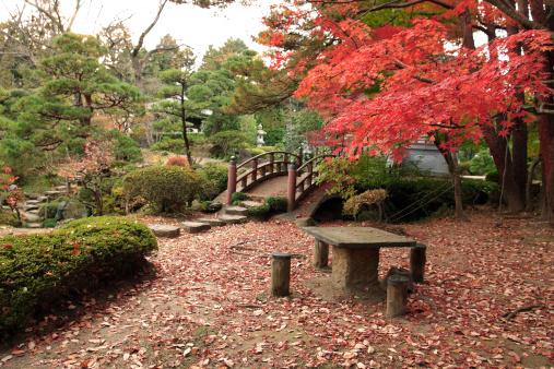 Japanese Maple「Japanese garden in autumn」:スマホ壁紙(1)