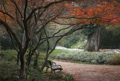 Japanese Maple「Japanese Garden」:スマホ壁紙(14)