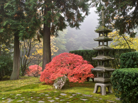 Japanese Maple「Japanese Garden Fall Colors Sapporo Pagoda Lantern Portland Oregon」:スマホ壁紙(6)