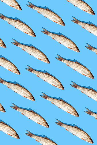 セイヨウカジカエデ「Raw fish」:スマホ壁紙(6)
