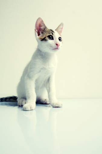 猫「Tabby 猫」:スマホ壁紙(5)