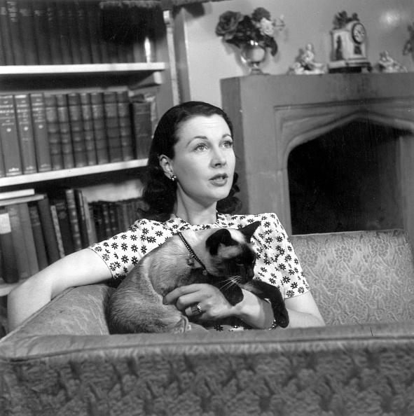 猫「Leigh At Home」:写真・画像(8)[壁紙.com]