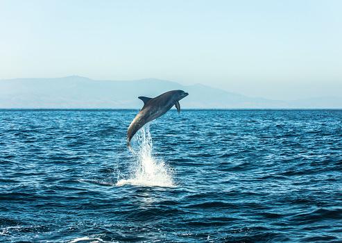 イルカ「Spain, bottlenose dolphin jumping in the air」:スマホ壁紙(14)