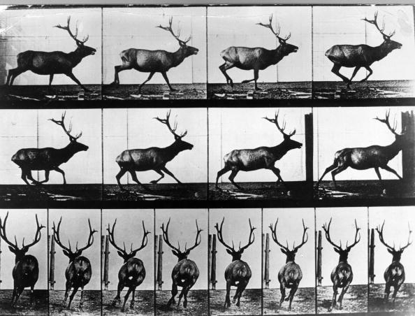 Animal Wildlife「Stag」:写真・画像(0)[壁紙.com]