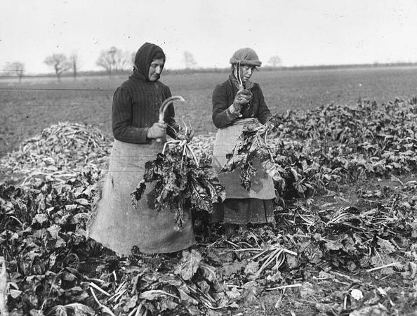 Two People「Sugar Beet Harvest」:写真・画像(1)[壁紙.com]