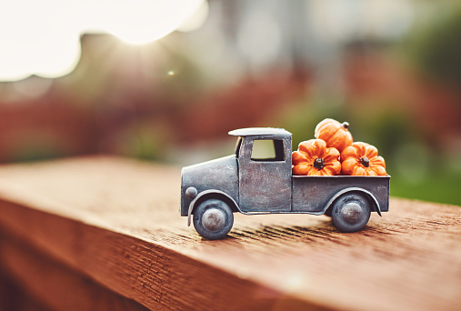 Harvesting「Little truck with load of miniature pumpkins for fall and Thanksgiving」:スマホ壁紙(11)