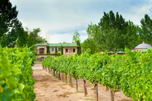 Grape「Grapewines in Casa Rodena Vineyard」:スマホ壁紙(11)