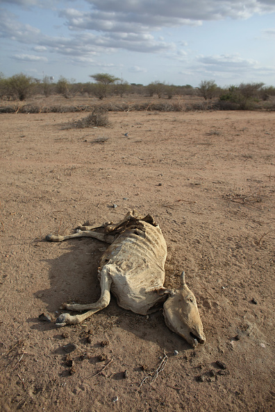 Thin「Refugees Flock To Dadaab As Famine Grips Somalia」:写真・画像(11)[壁紙.com]
