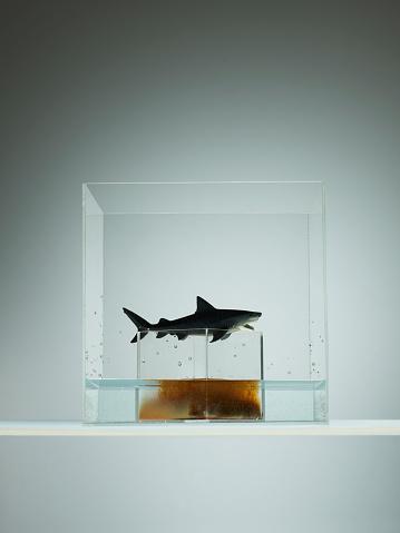 Vulnerability「Plastic shark over tank of pollution」:スマホ壁紙(13)