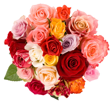 薔薇「ローズの」:スマホ壁紙(8)