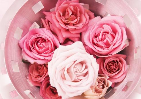 Celebration Event「Roses」:スマホ壁紙(3)
