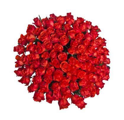 薔薇「ローズの」:スマホ壁紙(12)