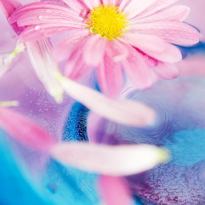 一輪の花「生花の水」:スマホ壁紙(15)