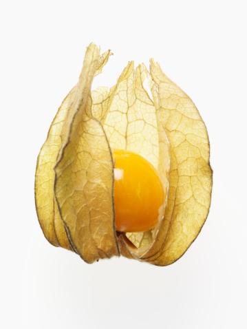 Chinese Lantern「Opened physalis husk with exposed fruit」:スマホ壁紙(5)