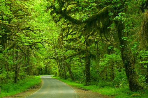 Hoh River Valley「Roadway in Hoh rainforest, Olympic National Park, Washington, USA」:スマホ壁紙(2)