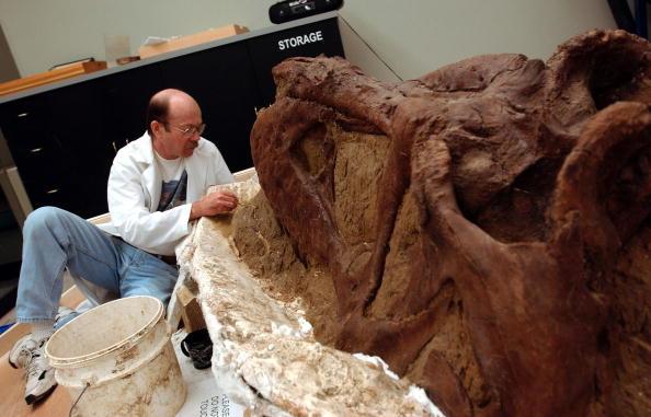 Paleontologist「Researchers Unveil T-Rex Skull」:写真・画像(4)[壁紙.com]