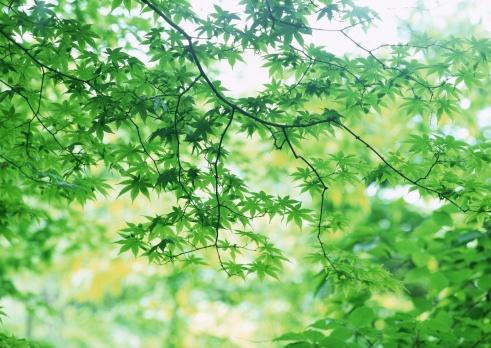 Nikko City「Maple」:スマホ壁紙(7)