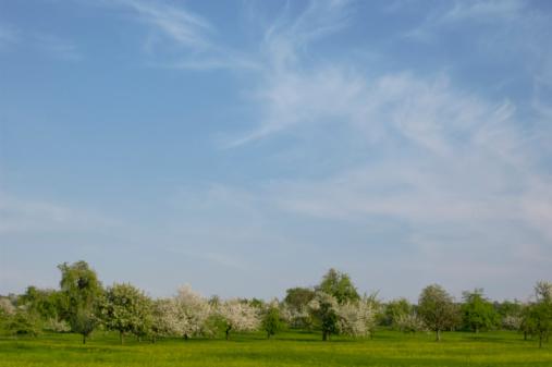 April「Spring landscape, green grass and blossom trees, sky blue」:スマホ壁紙(7)