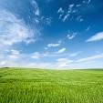 新緑壁紙の画像(壁紙.com)